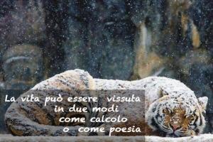 tigre sotto la neve